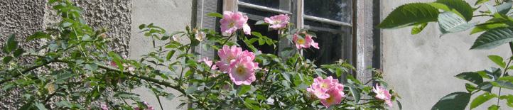Rosen vor Schloß Quetz