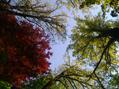 Baumwipfel im Quetzer Park