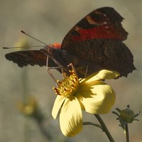 Schmetterling im Schlossgarten fotografiert von Georg Wenzel